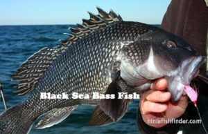 Black Sea Types Bass