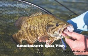 smallmouth types of Bass
